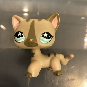 Lps shorthair cat #792